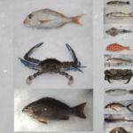 Fish Supplied Profile